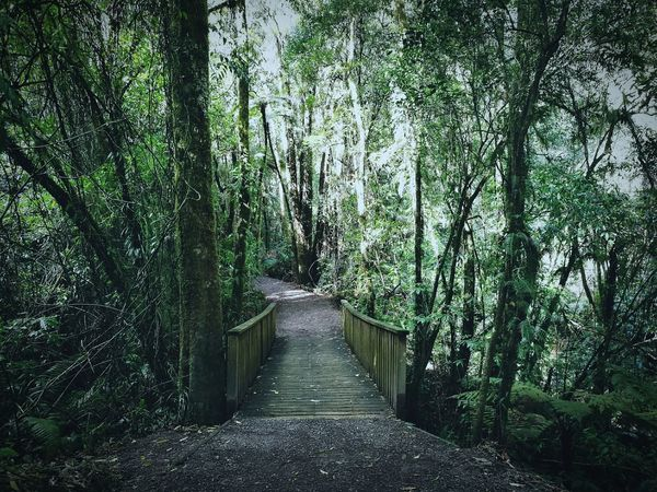 My Favorite Place Outdoors Nature Tranquility Footpath Walkway The Way Forward Beauty In Nature Tree Tranquil Scene Forest Tranquility Growth Narrow Walkway Nature Footpath Tree Trunk Scenics Long Branch Diminishing Perspective Beauty In Nature Outdoors Non-urban Scene