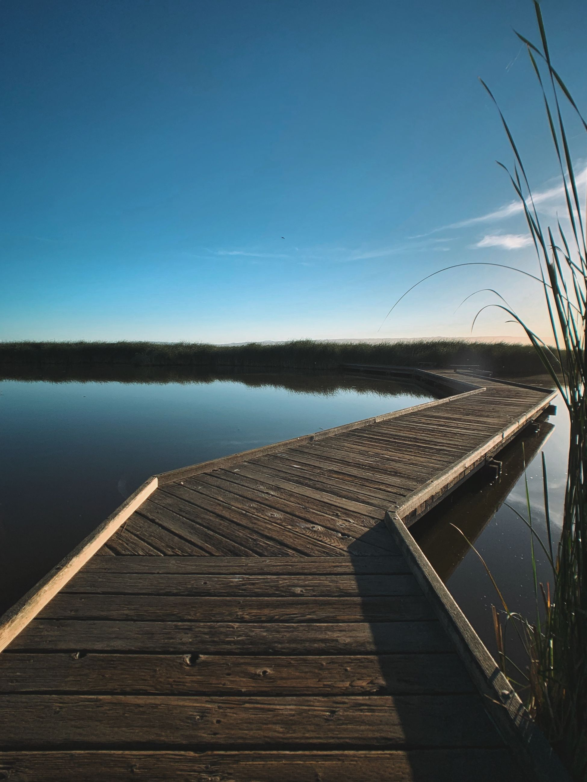 water, lake, wood - material, sky, tranquility, pier, nature, beauty in nature, no people, tranquil scene, jetty, scenics - nature, the way forward, non-urban scene, day, blue, direction, outdoors, plant, wood paneling