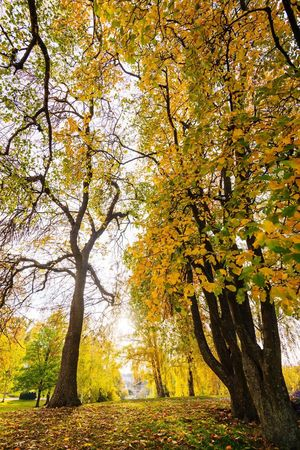 Trees Landscape Autumn Fall Urban Nature Nordic Light Tree Plant Beauty In Nature Branch Growth Nature No People Autumn Tranquility Day Low Angle View Yellow Scenics - Nature Outdoors Sunlight Leaf Green Color Change Tranquil Scene