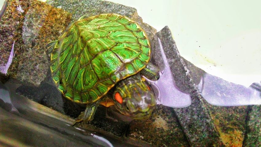 My turtle is mutan hahaha Taking Photos That's Me Enjoying Life Hello World Ninja Turtles
