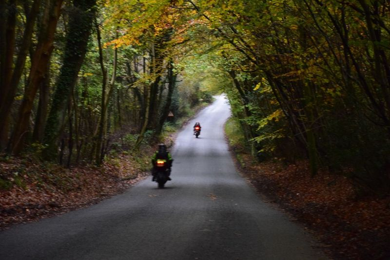 Autumn The Way Forward Forest Tree Road Nature One Person Change Walking Leaf Full Length Day Outdoors Real People Adventure Beauty In Nature Adult People One Man Only New Forest, Hampshire. UK Motorbike Sunset The Traveler - 2019 EyeEm Awards