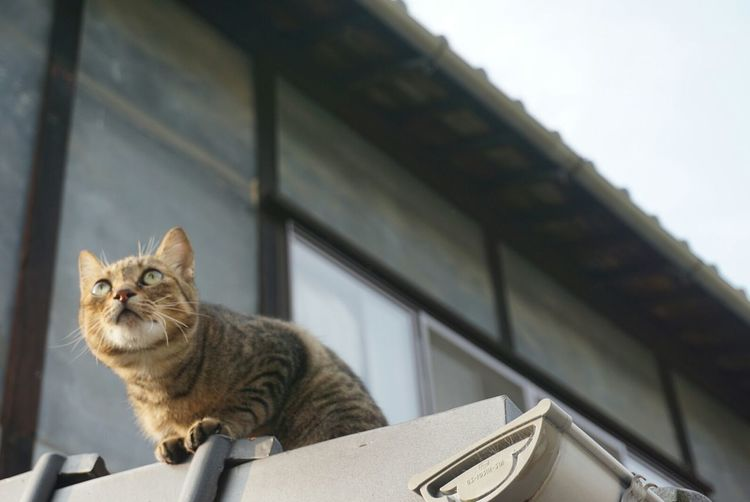 Low Angle View Of Cat On Building