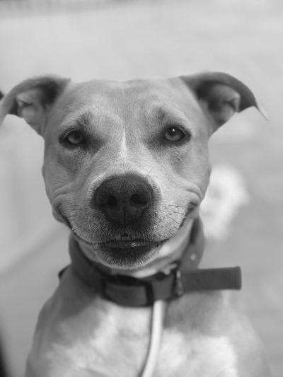 #Dog#animals#lov