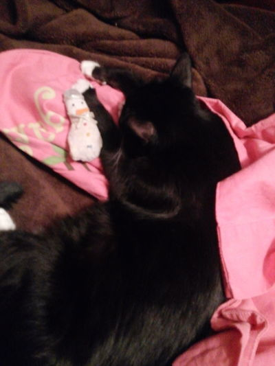 Tuxedocat Cat♡ Catoftheday Preciousthecat Catnapping
