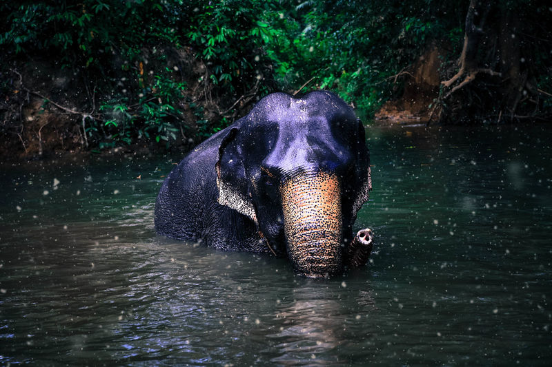 Animal Themes Animal Trunk Animal Wildlife Animals In The Wild Day Domestic Animals Elephant Lake Mammal Nature No People One Animal Outdoors Portrait Water Waterfront Wet My Best Photo