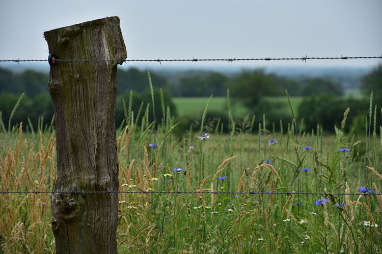 Barbed Wire Barrier Boundary Day Fence Field Focus On Foreground Grass Green Color Land Landscape Nature No People Outdoors Plant Post Protection Safety Security Tranquility Wire Wood - Material Wooden Post