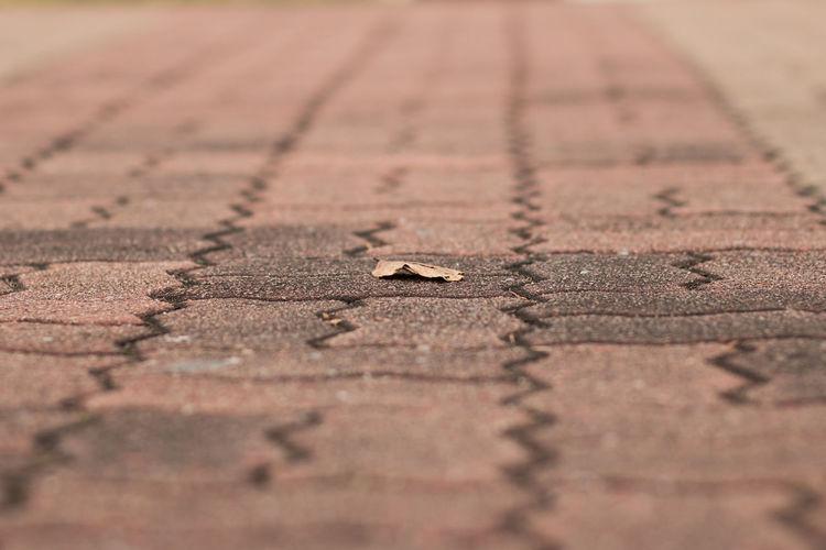 Close-up of footpath