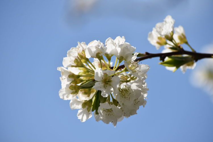 White morning Flowering Plant Flower Fragility Beauty In Nature Freshness Plant Vulnerability  Growth Petal Blossom Springtime Close-up Tree Branch Flower Head Inflorescence