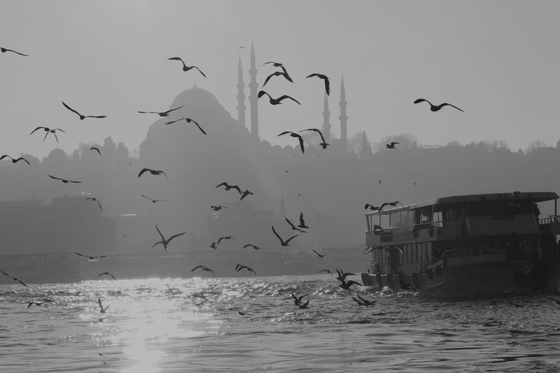 a ferryboat and its company of seagulls Bird Eminönü/ İstanbul Ferryboat Flying Outdoors Sea Seaside Side View Spread Wings Water