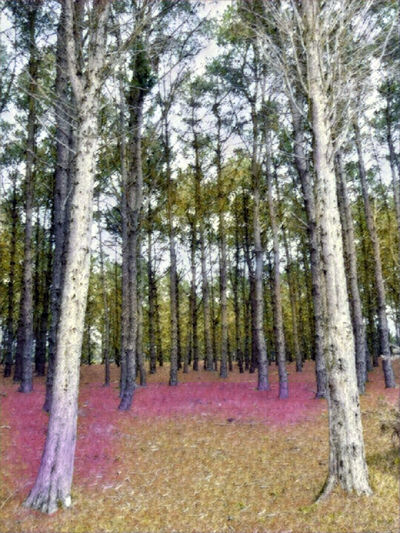 Spring forest theme Spring Forest Spring Forest Illustration Colored Picture Day Into The Forest Forest Forest Illustration Lot Of Trees Nature Perspective On Nature Artistic Edit Picture Pink And Green Forest Pink Ground Spring Theme Tranquil Scene Tranquility Tree Tree Trunk No People Outdoor No Urban Scene Illustration Vertical Panorama Vibrant Colors