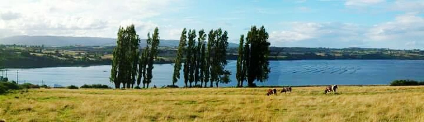 Puerto Montt Beautiful Nature Natural Beauty Adventuretime Exploring Nature Nature_collection Relaxing Moments Walking Around Enjoying Life Capturing Freedom