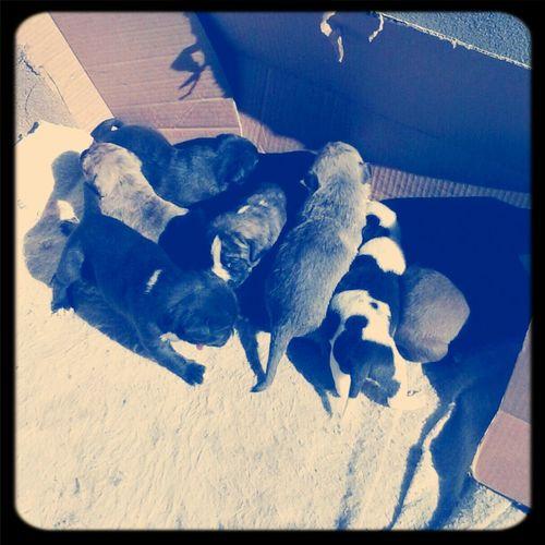 Montanas Babys (: