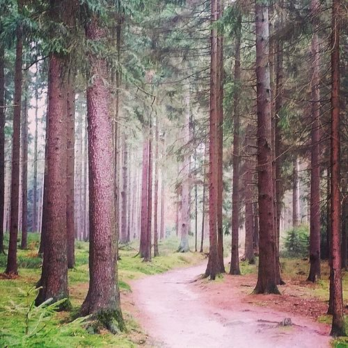 Into the Wald Naturgram Wood Wald Lüneburgerheide Draußen Hiking