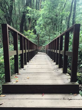 A bridge to forest Forest The Way Forward Direction Tree Plant Built Structure Railing Bridge Bridge - Man Made Structure Growth Wood - Material No People