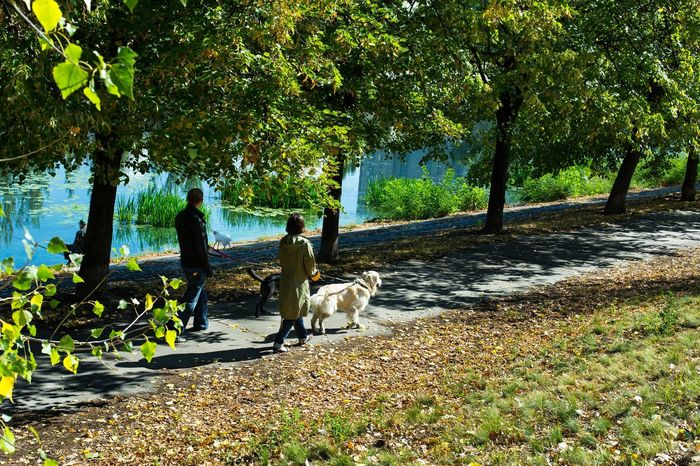 Man and woman walking their dogs in the park Animal Animals Colors Dog Dog Walking Dogs Dogslife Dressed EyeEm Nature Lover Friend Garden Green Labrador Lake Leading The Dogs To Walk Man Nature Nature_collection Outdoors Park Path Walk Water White Woman