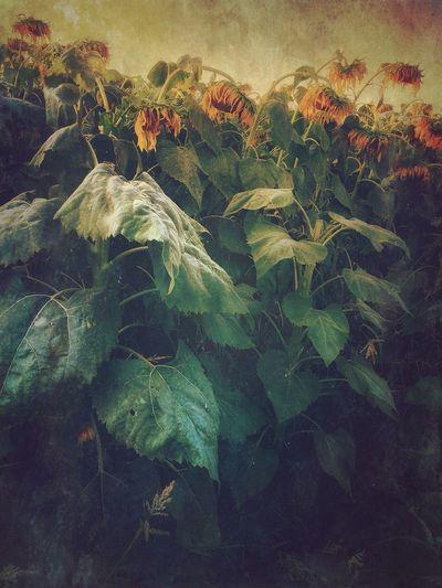 EyeEm Best Shots - Landscape NEM Silence IPhoneography NEM Painterly NEM Landscapes