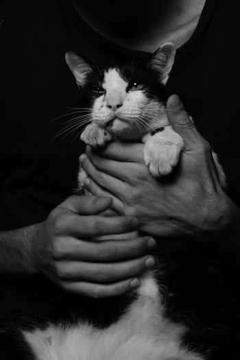 Close-up of hand holding cat against a black background