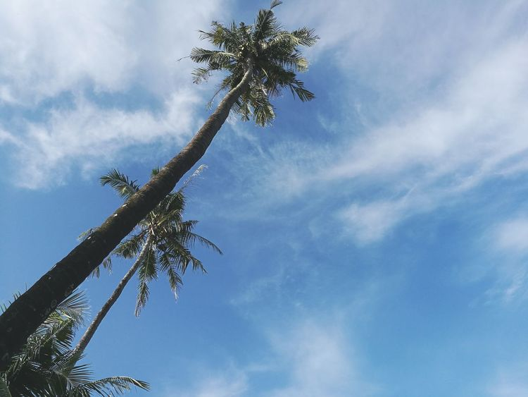 Relax view Sky Coconut Trees Feel Good Beach Lifestyles Tree Branch Palm Tree Blue Sky