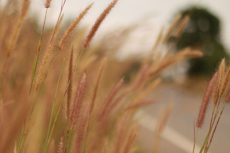 Close-up of plants by road