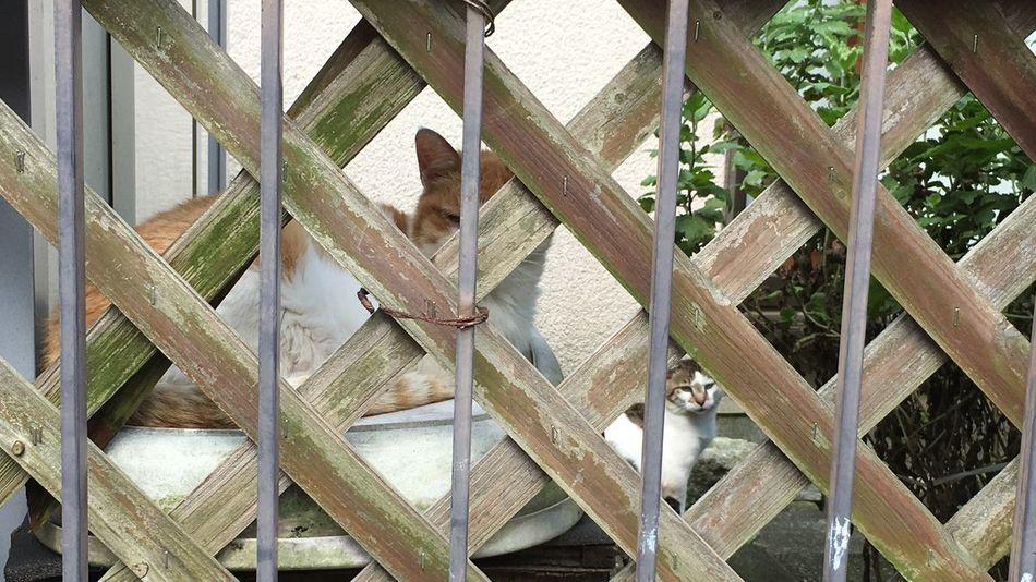野良猫 Stray Cat ご飯待ち♪