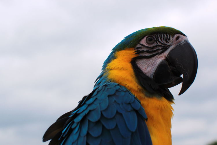 Close-up of a bird against blue sky
