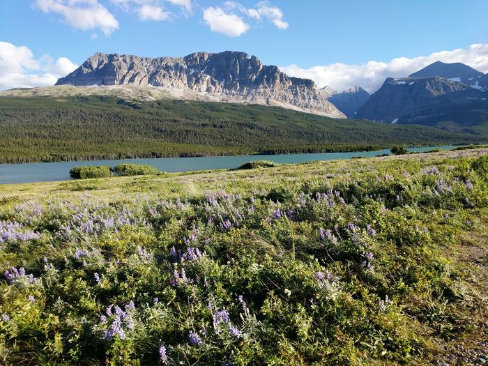 EyeEm Selects Flower Mountain Snow Flower Head Tree Rural Scene Mountain Peak Sky Landscape Wildflower Growing Uncultivated