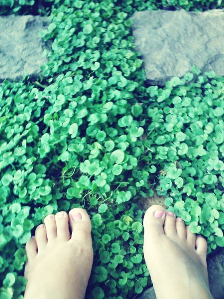 Pies Amateurphotography Photography Edit My Feets
