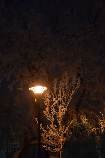 Dark Illuminated Lamp Lighting Equipment Night No People Outdoors Sky Snow Tree Winter Winter Lamp Winter Night