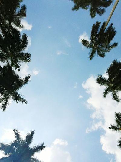 Sky Nature Tree Palm Tree Day Cloud - Sky Pease Love Nature Guatemala Naturaleza
