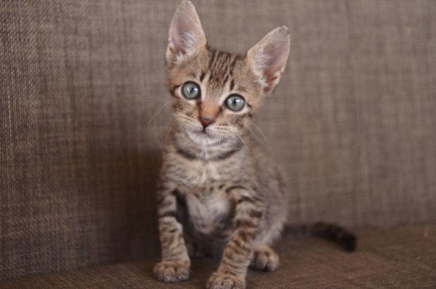 FirstEyeEmPic Cats Pets Kitten Meow🐱 First Eyeem Photo