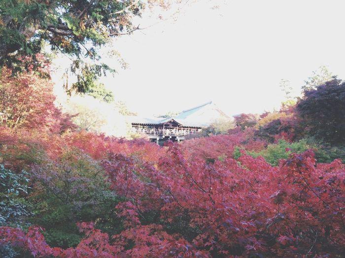 Autumn Beaitiful In Kyoto