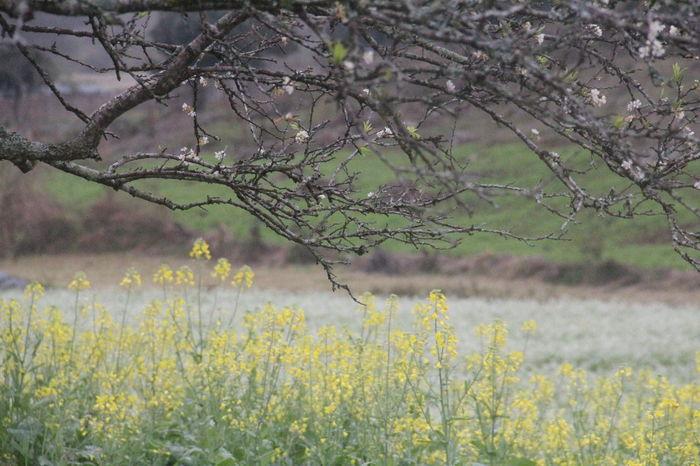 Only need a few sunshine became perfect weather ^^ EyeEm EyeEm Best Shots EyeEm Gallery Flowers Ilovehanoi Lifeinvietnam Mocchau Mocchauvietnam Plum Flower Yellow Flower Yellow Flowers
