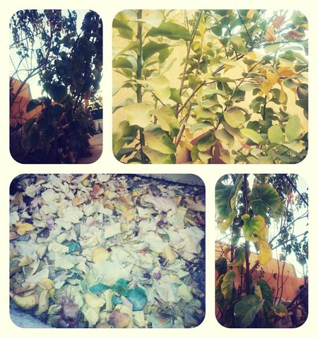 The Autumn in My House Autumn Colors Autumn Trees