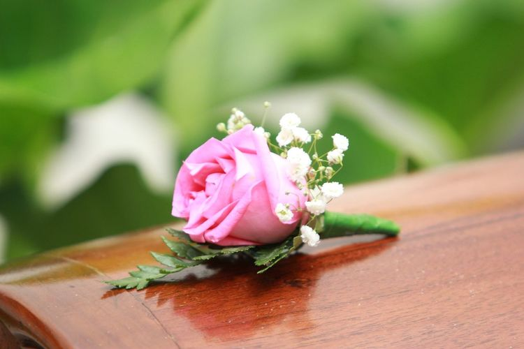 Pink Flower Flowering Plant Flower Pink Color Close-up Freshness Plant Beauty In Nature Nature Wood - Material No People Flower Head Selective Focus Rosé Rose - Flower Luxury Flower Arrangement