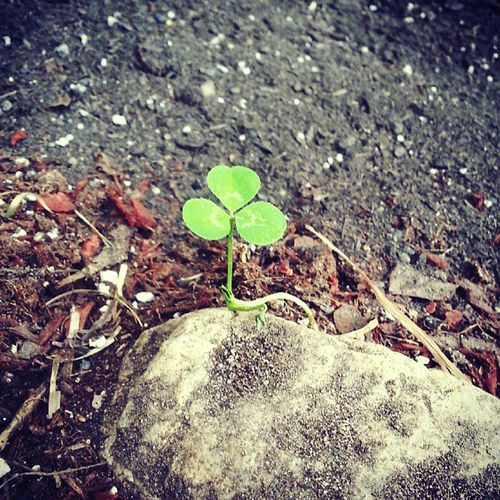 Random Clover All Alone Everything Is Possible Dirt Rock Check This Out Nature Photography Simple Things In Life Nature Walk Perspectives On Nature