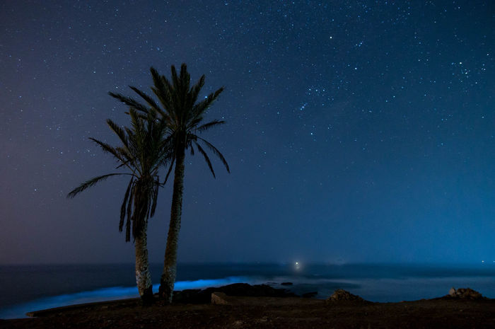 Night Star - Space Palm Tree Astronomy Milky Way Tree Landscape Galaxy Sea Sky Beach Outdoors Tranquility No People Scenics Blue Nature Beauty In Nature Horizon Over Water Constellation