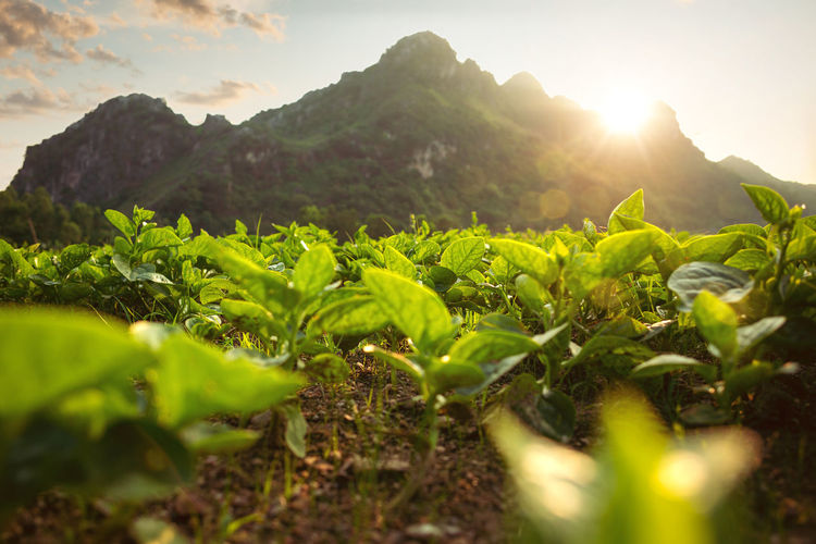 Scenic view of plants growing on field against sky