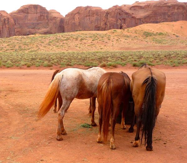 Horses standing at desert