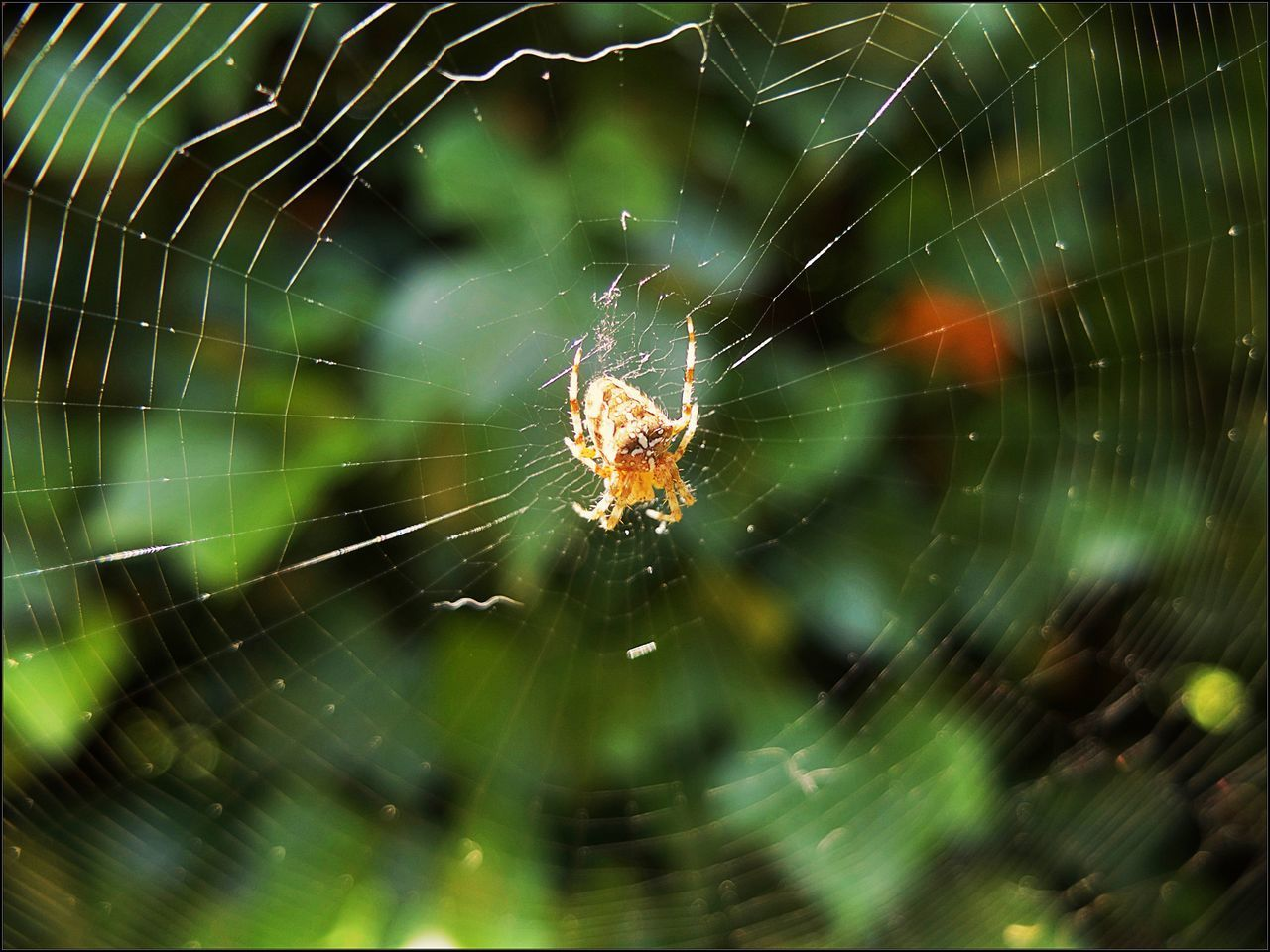 spider web, fragility, animal themes, animal, arachnid, animals in the wild, animal wildlife, invertebrate, one animal, spider, arthropod, close-up, focus on foreground, vulnerability, insect, nature, selective focus, day, survival, no people, web, outdoors, animal leg, complexity
