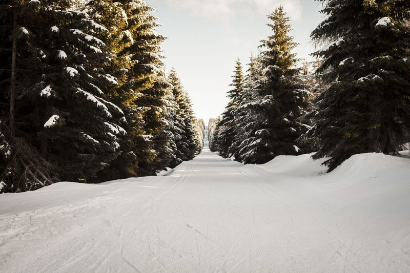 Spruce Trees Spruce Forest Skiing Ski Skiing 🎿 Bushes Bushes And Flowers Wintertime Snowcapped Mountain Snow Views Snow Covered Trees Snow Covered Landscape Forestwalk Forest Photography Snow Winter Cold Temperature Tree Pinaceae Forest Pine Tree Outdoors Road Nature Tire Track Day Landscape Tree Area Sky Snowing Shades Of Winter