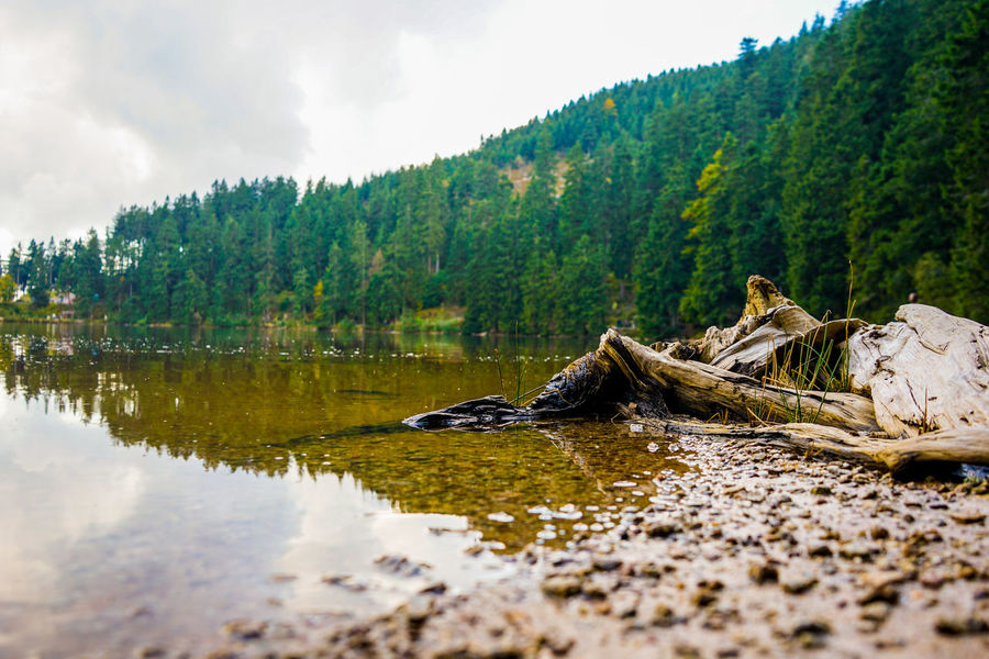 Green Color Nature Nature Photography Tree Water Reflections Beauty In Nature Blackforest Cloud - Sky Day Forest Lake Lake View Nature Nature_collection No People Outdoors Scenics Sky Tranquil Scene Tranquility Tree Water Waterfront