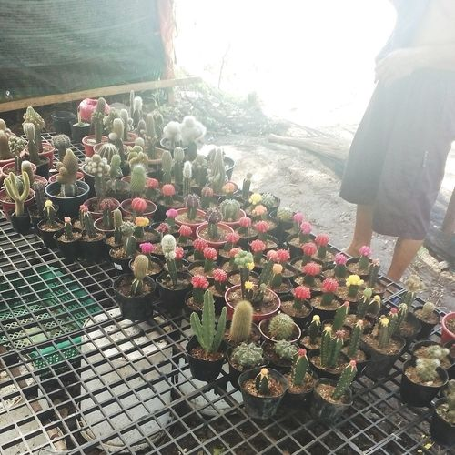 Fck u 🌵 Nature Flower Day Freshness Growth Beauty In Nature Cactus Flower Cactus Garden Cactuslover