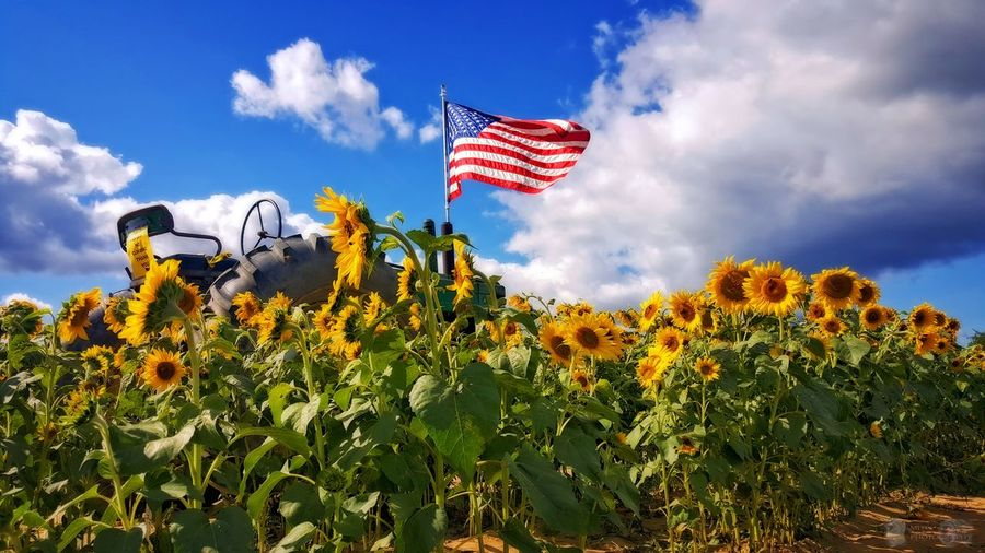 Good morning....happy Thanksgiving...🦃 Flag Patriotism Cultures Plant Sky Flower Rural Scene Nature No People Beauty In Nature Motion Landscape Outdoors Day EyeEm Nature EyeEm Best Shots - Landscape Tranquility EyeEm Best Shots Beauty In Nature