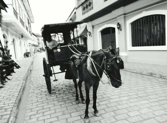 Horsedrawn Outdoors Day Street Horse Cart One Animal Mobile Photography Old Times Transportation Horses Horse Life