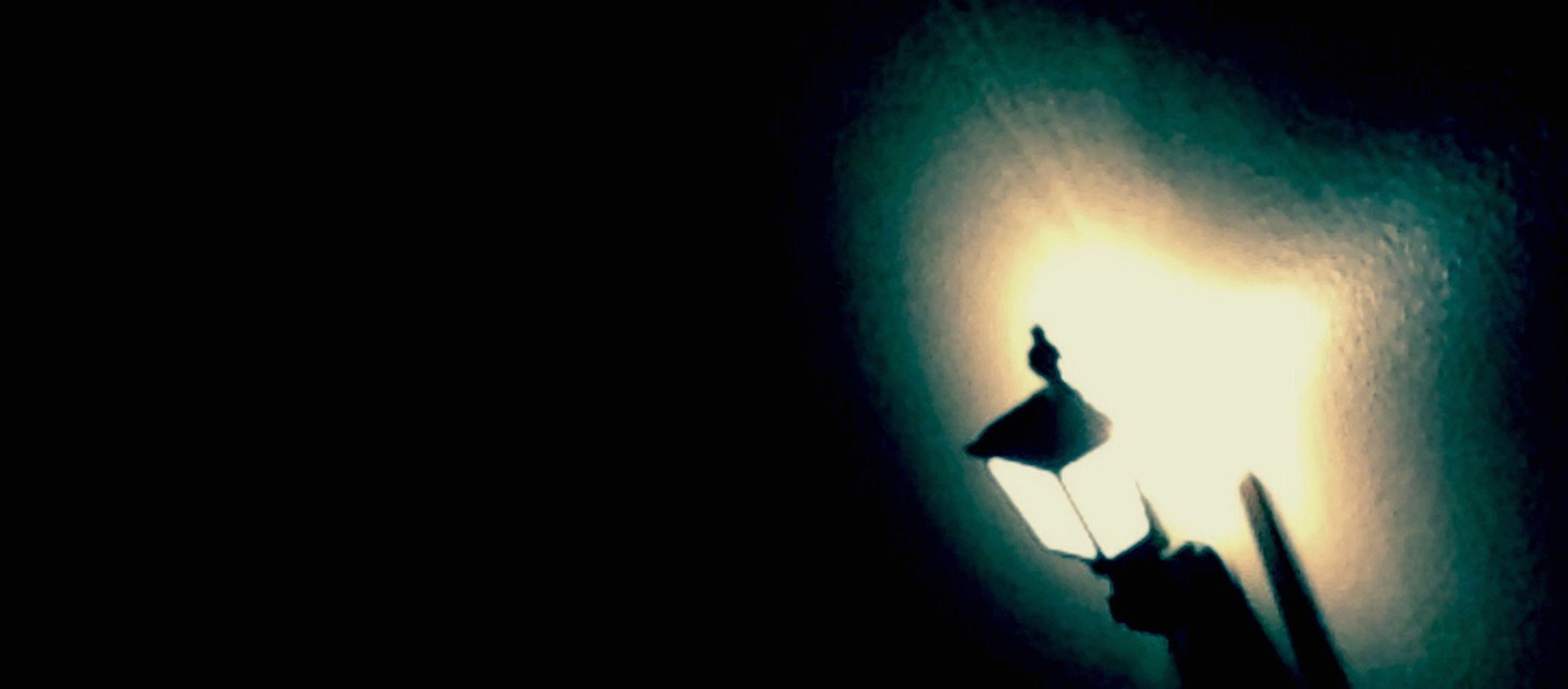 silhouette, low angle view, night, copy space, illuminated, dark, lighting equipment, sky, clear sky, street light, bird, glowing, outdoors, sun, light - natural phenomenon, no people, dusk, moon, sunlight, outline