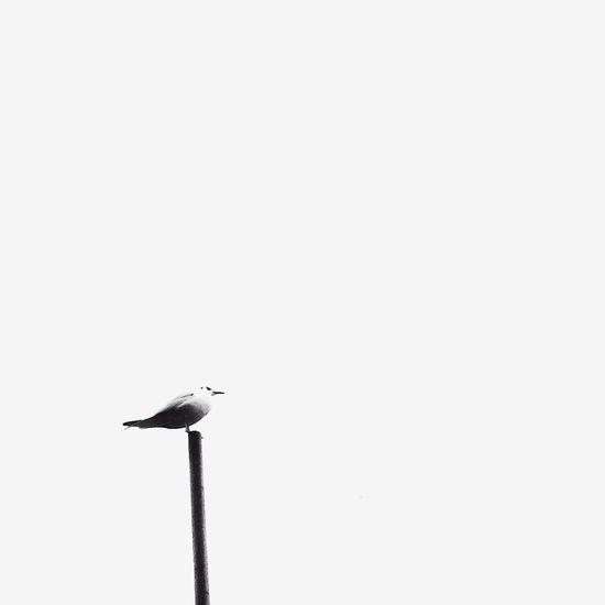 2 minutes and 30 seconds EyeEm Nature Lover EyeEm Best Shots Blackandwhite Black & White