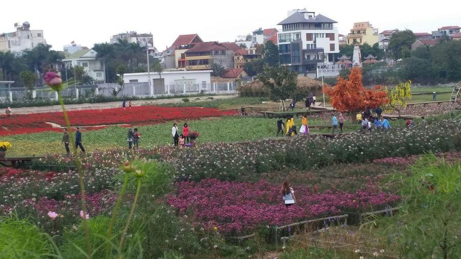 Flower valley (West lake, Hanoi, Vietnam)