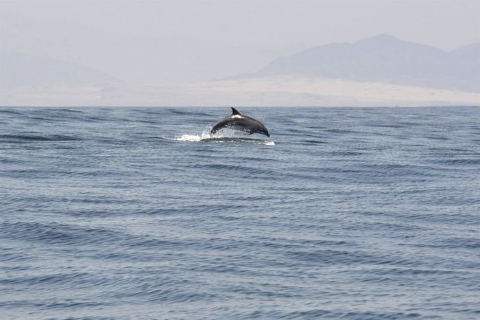 Perfection Beauty In Nature Boat View Chile Dolphin FIN Jump Jumping Nature Pacific Ocean Perfect Remote Safari Sea Sea Safari Speed Tourism Water