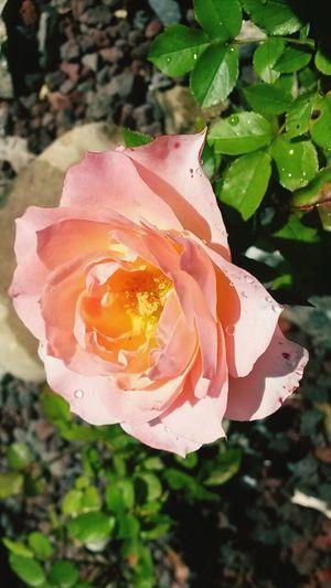 Flower Sun Rain