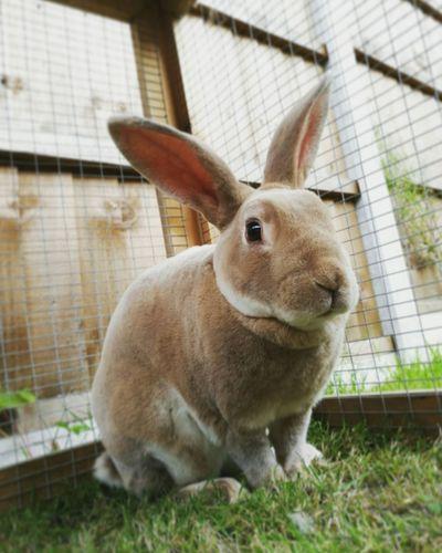 Close-up of domestic rabbit